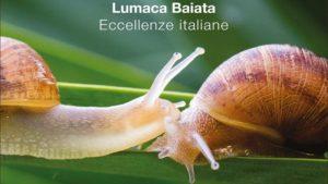 Read more about the article La Lumaca Baiata: eccellenza siciliana tra qualità e umanità
