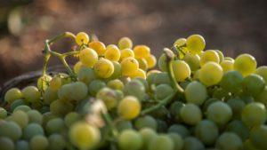Read more about the article Cantine Pellegrino: il vino protagonista tra famiglia, storia e territorio