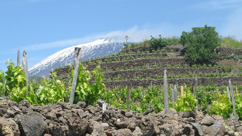 Terra Costantino: il vino bio nato dall'amore per la natura